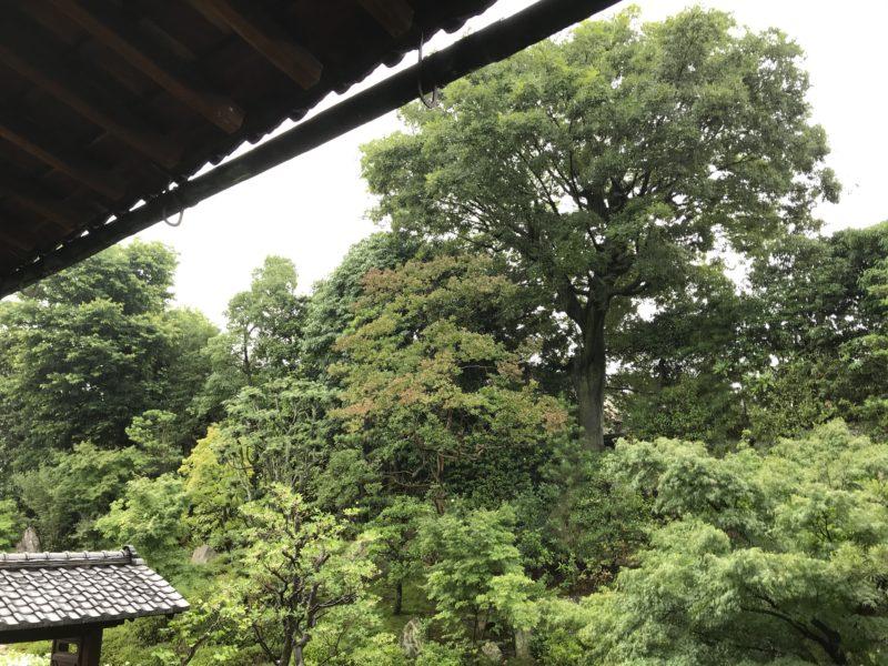 土屋作庭所からのお知らせ 土屋作庭所通信 平成31年新春号