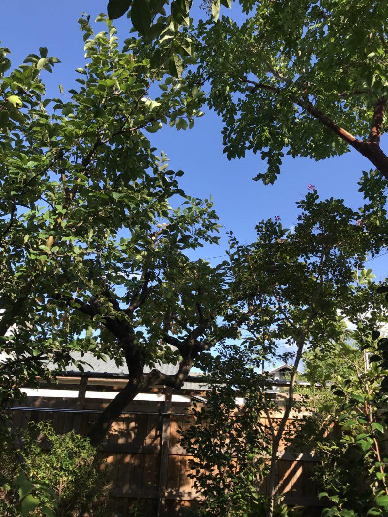 土屋作庭所からのお知らせ 夏の庭の手入れ教室 令和3年